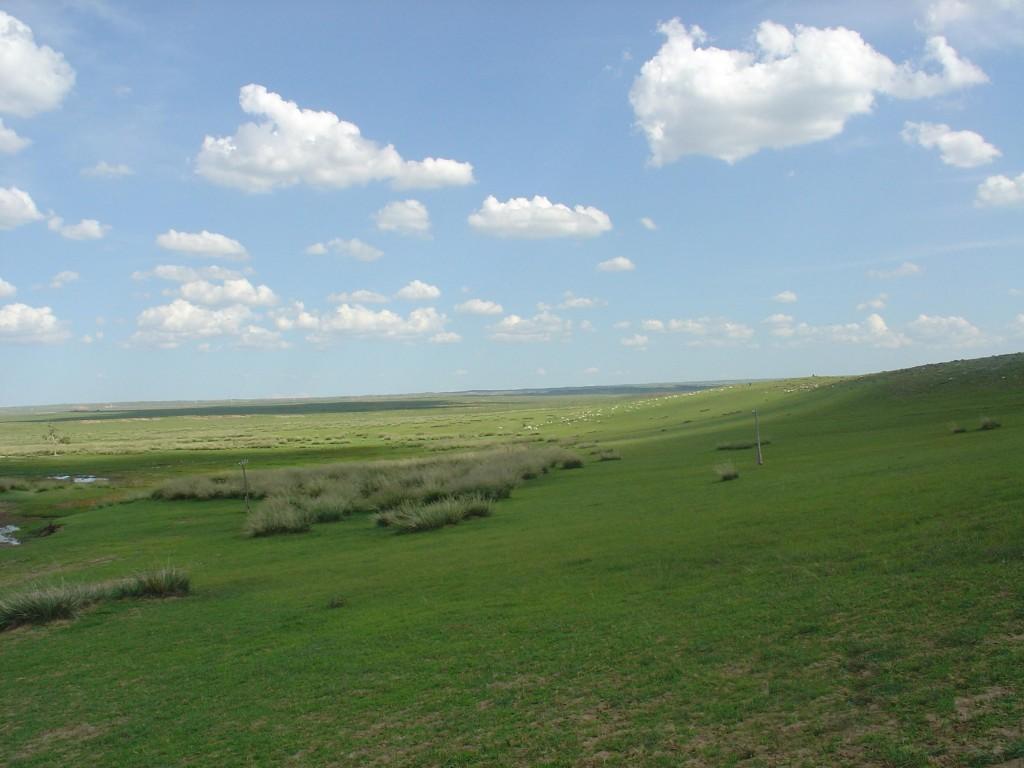 Grasslands-menggu